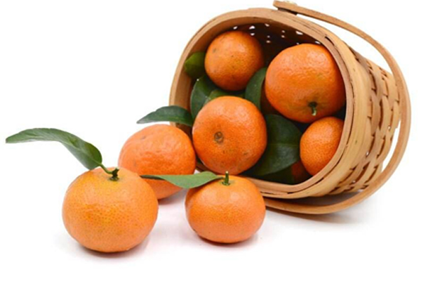象州砂糖橘